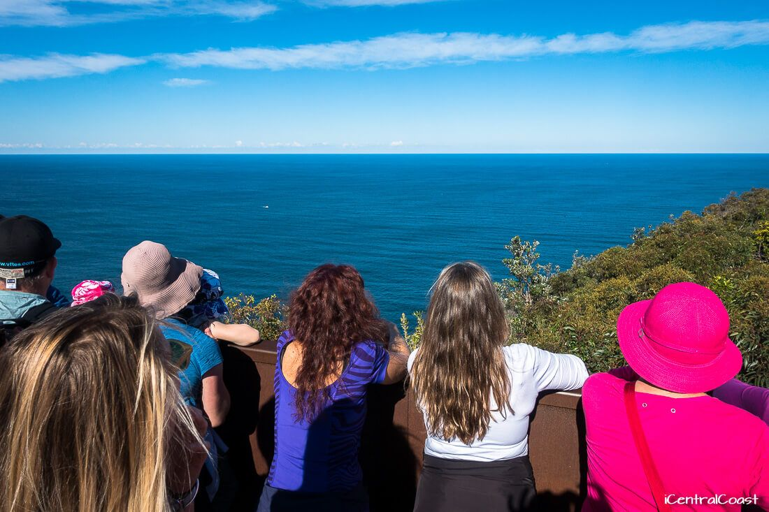 Looking for whales at Captain Cook Lookout