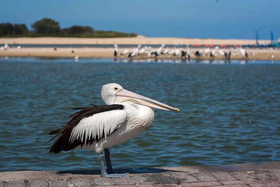Pelican - The Entrance