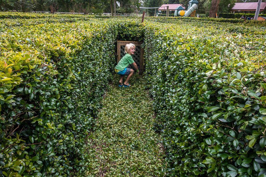 Hedges maze