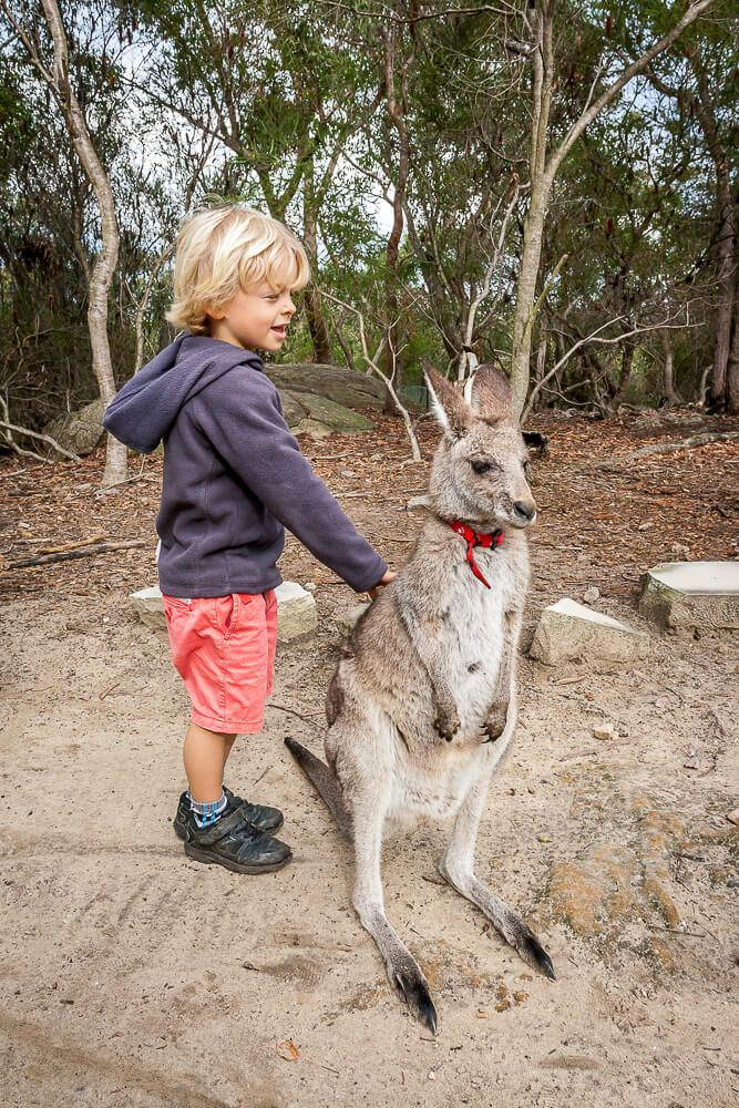Patting a kangaroo at Walkabout Wildlife Park