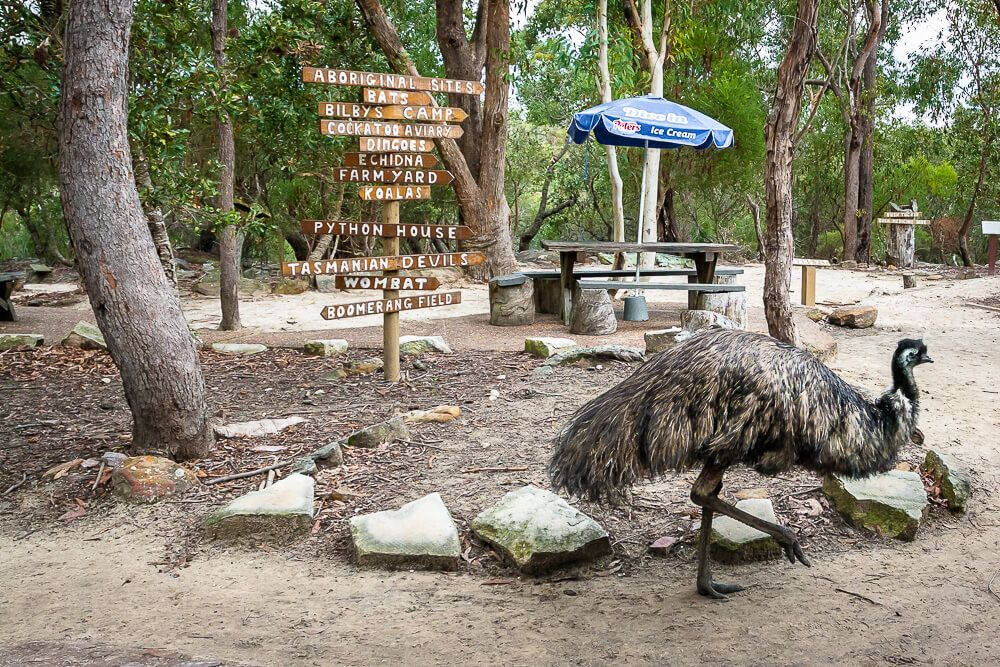 Emu roaming free at Australia Walkabout Wildlife Park