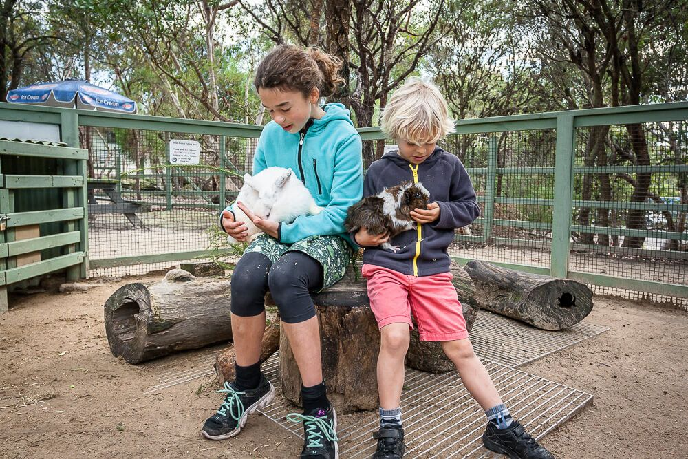 Cuddling guinea pigs and rabbits at Australia Walkabout Wildlife Park