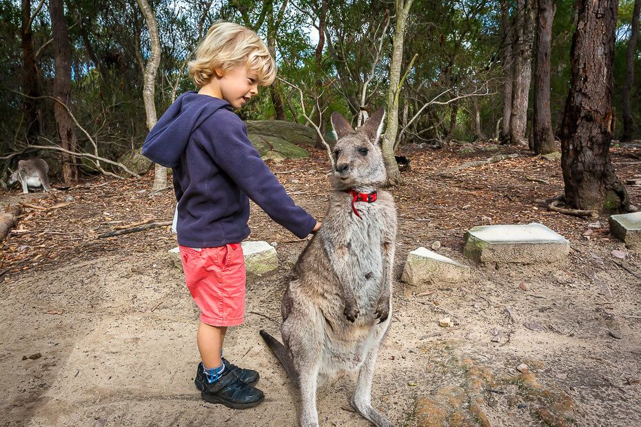 boy patting a small kangaroo