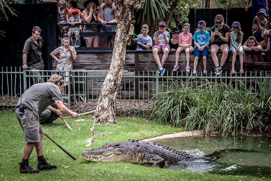 Crocodile show with Elvis