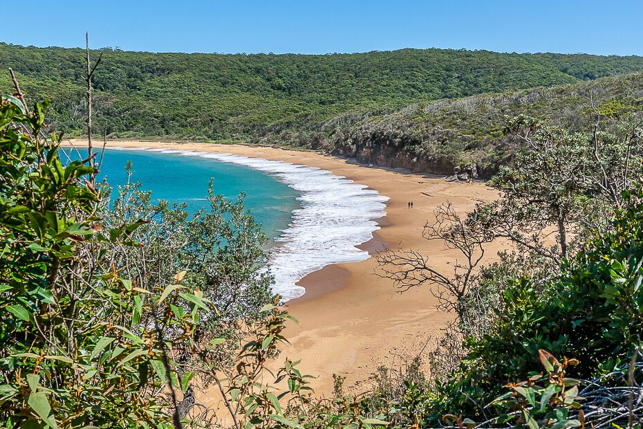 Nsw Central Coast Dog Friendly Beach Camping