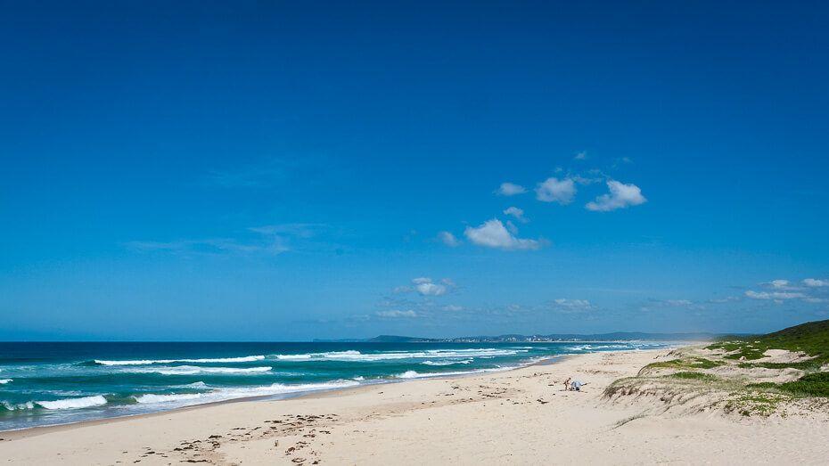 Pelican Pelos Beach nsw central coast