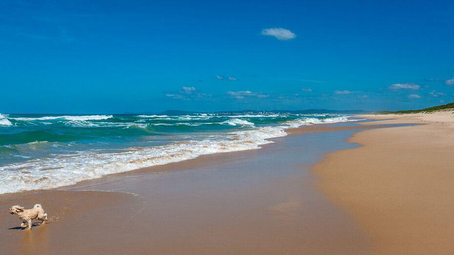 Pelican Pelos Beach