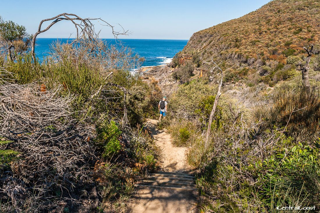 Walking down the bush track to Caves Bay