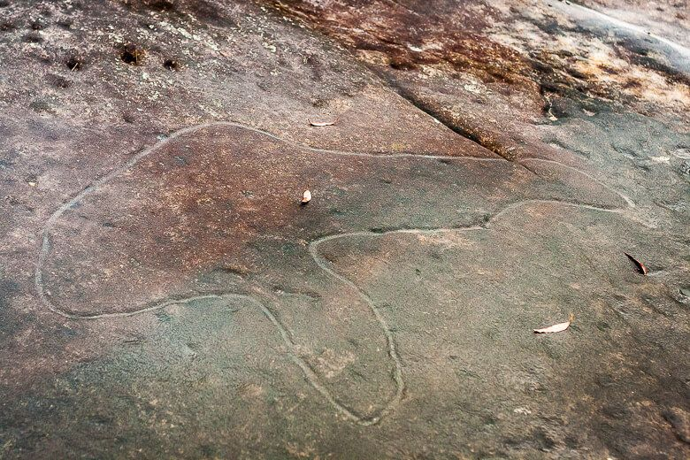 Aboriginal engraving of a fish at Bulgandry Aboriginal art site.