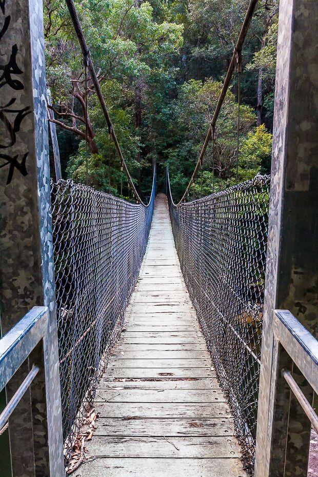 Phil Houghton suspended Bridge