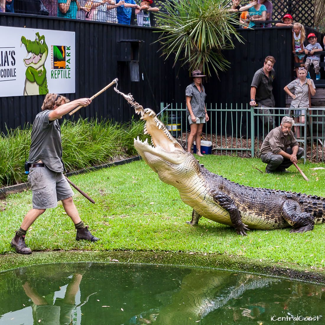 Central Coast attractions: Australian Reptile Park