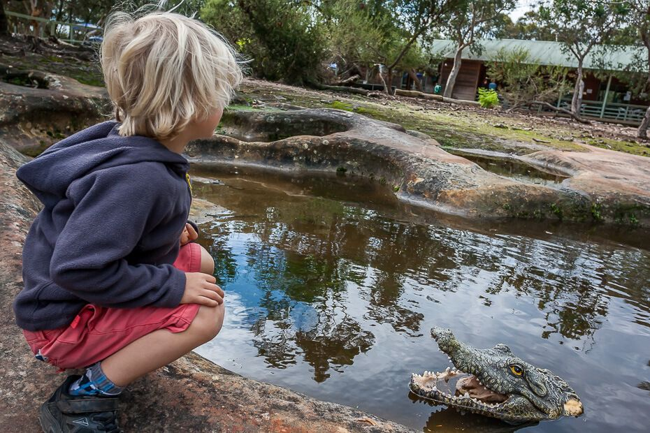 Liam looking at a fake crocodile