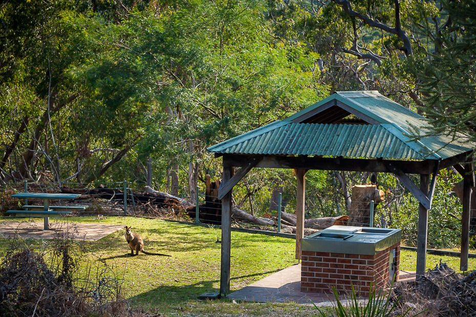 Girrakool Picnic Area: picnic table and barbecue, and a wallaby.