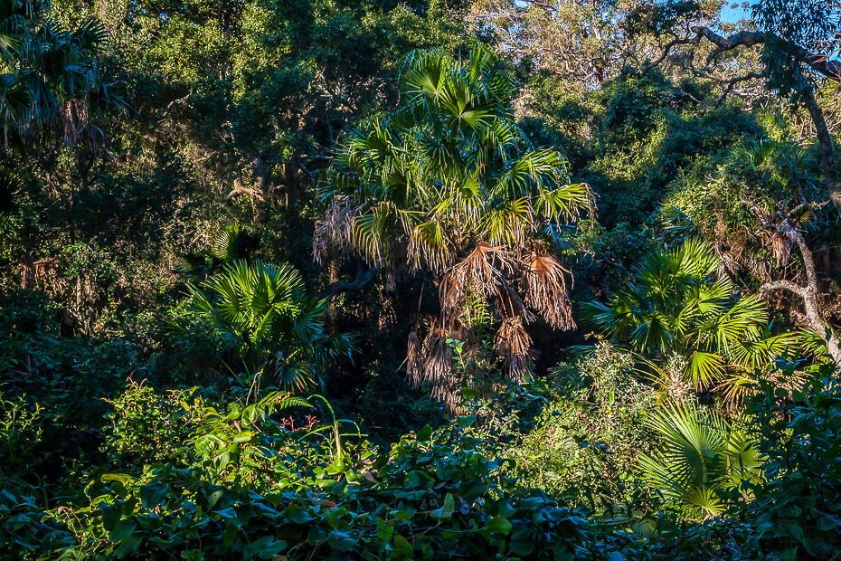 Lillypilly loop trail... a beautiful walk through a littoral rainforest
