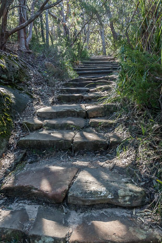 Stone stairs along the walking track