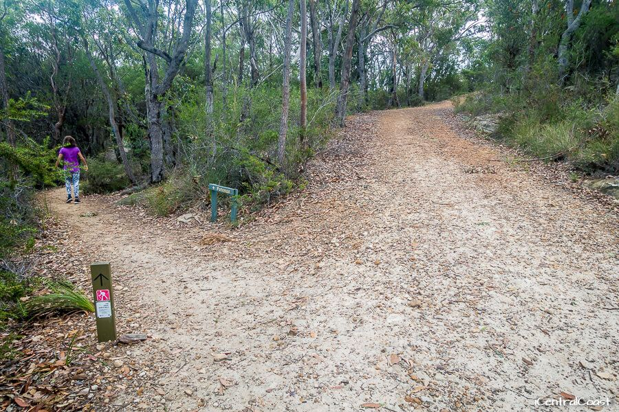 Patonga walking track