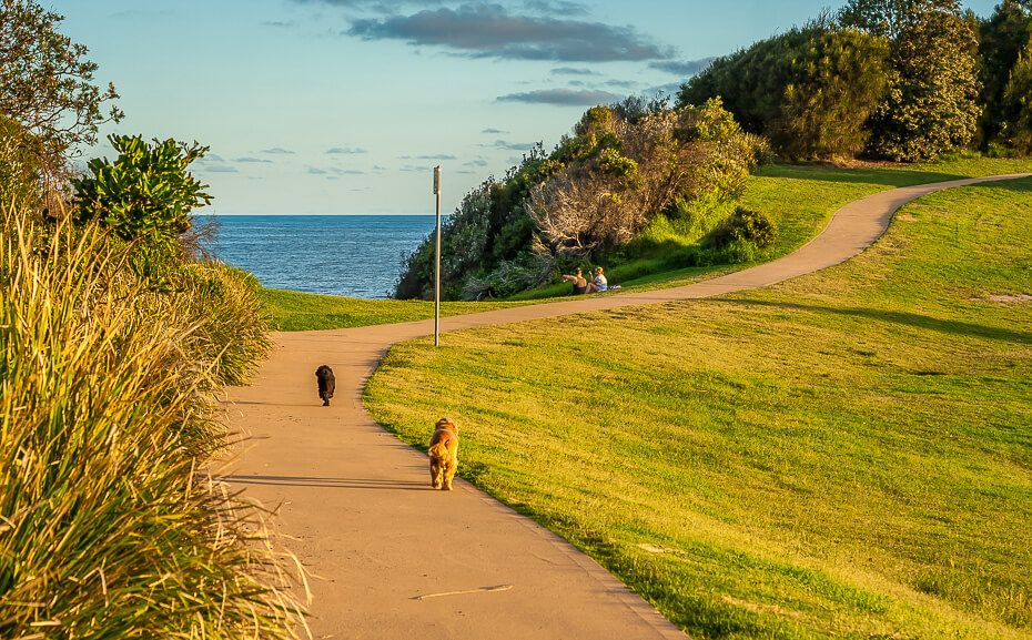 dog off leash area in terrigal