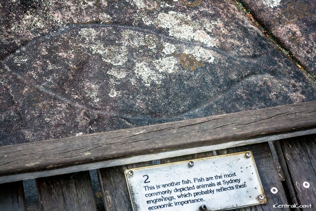 Fish engraved in a rock at the Bulgandry Aboriginal Art Site