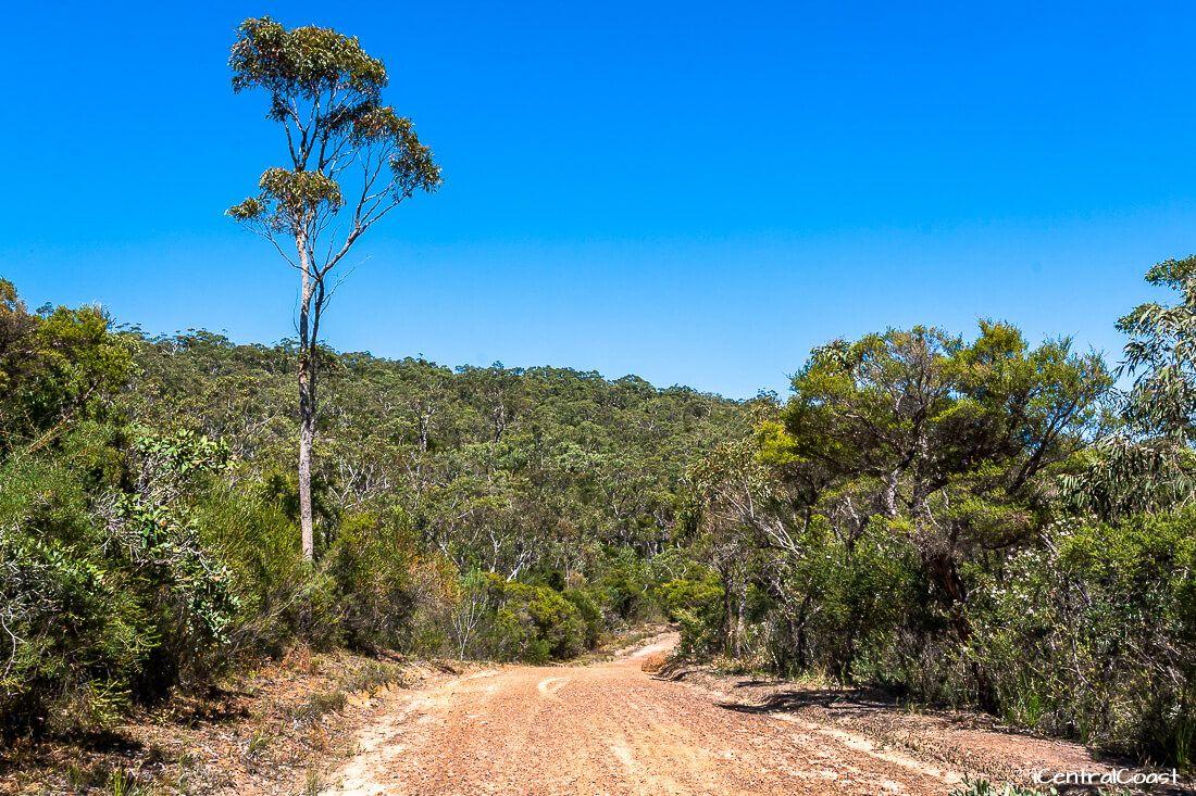 Tommos loop trail in Brisbane Water National Park