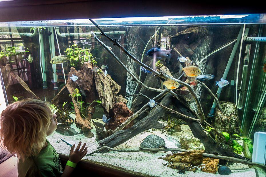 Looking at the fish tank
