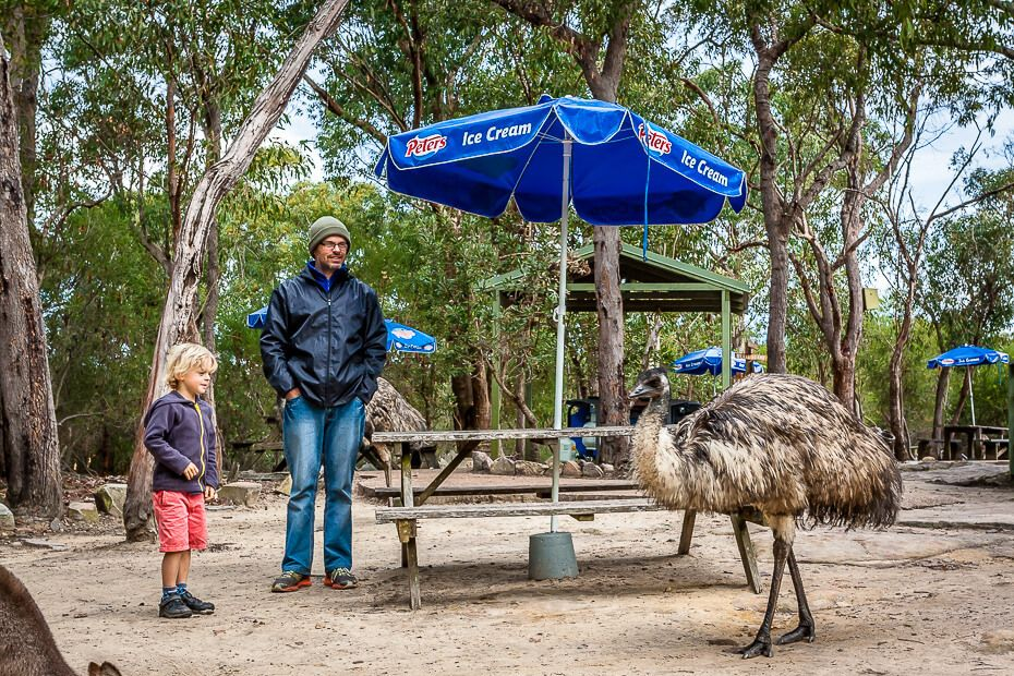 dad and son looking at an emu at wildlife park.