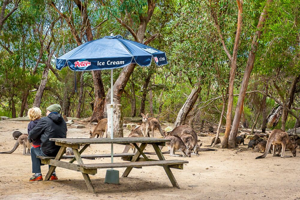 Picnic area at Australia Walkabout Wildlife Park