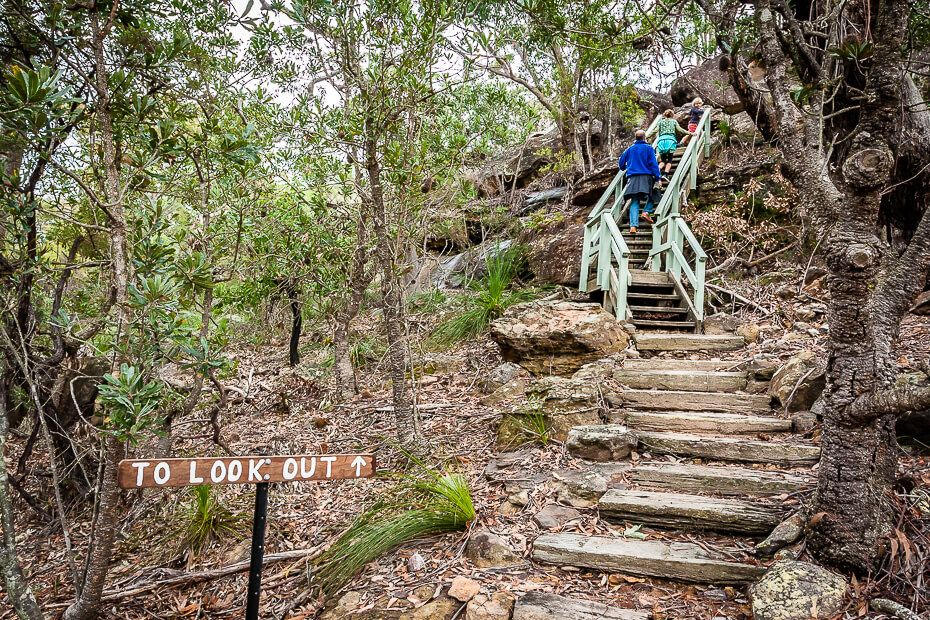 People climbing stairs at a bushwalk leading to a lookout
