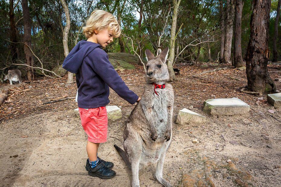 boy patting a small kangaroo