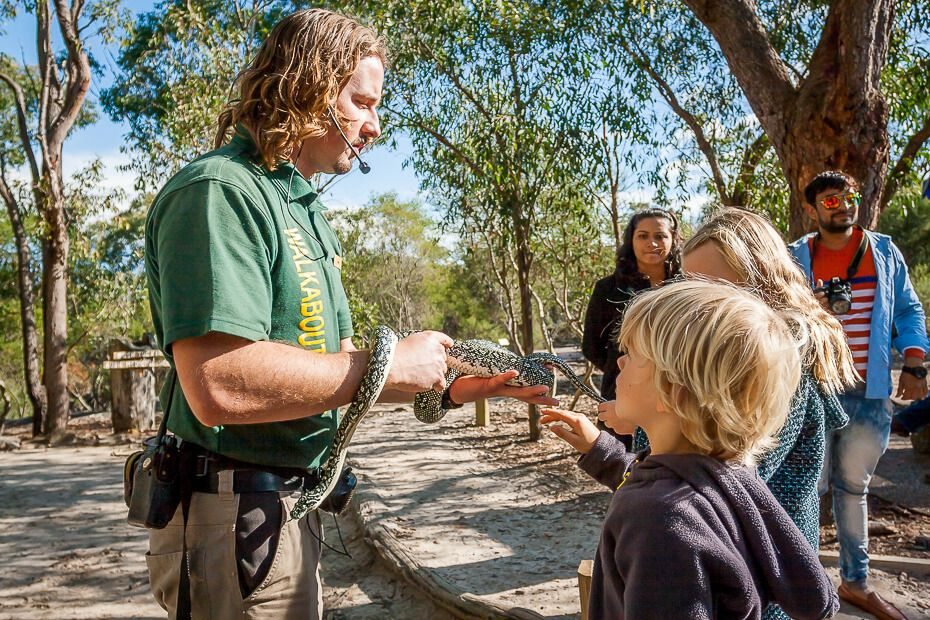Patting a python at Australia Walkabout Wildlife Park