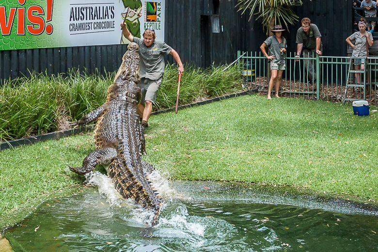 Australian Reptile Park: feeding the crocodile