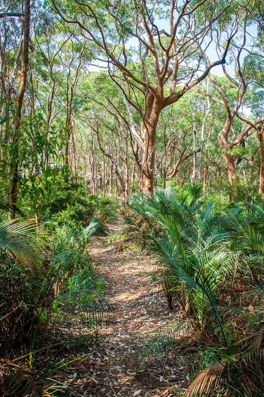 Bullimah Spur walking track