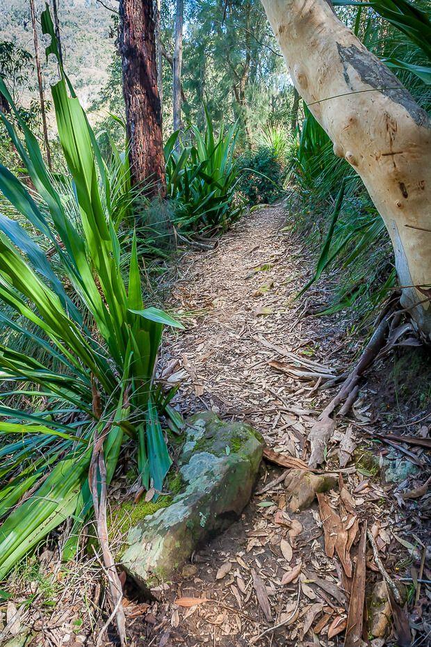 Mooney Mooney nature walk