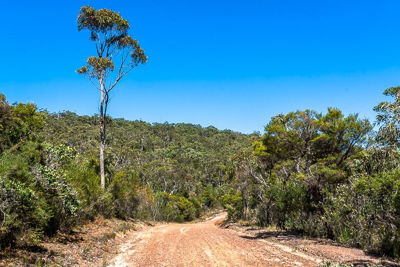 Tommos Loop Track in Brisbane Water National Park