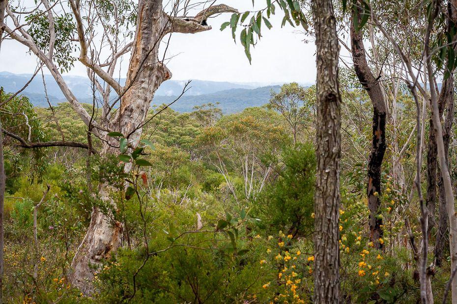 Valley view on the Bulgandry Aboriginal art site walk