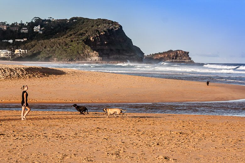 Dog beaches on the Central Coast - Avoca Beach