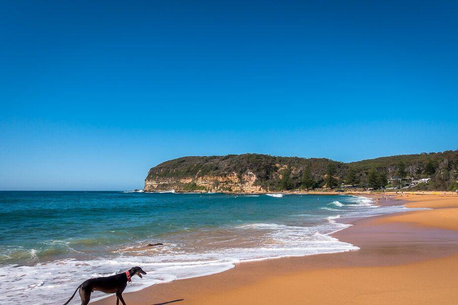 Dog-friendly beach - Copacabana