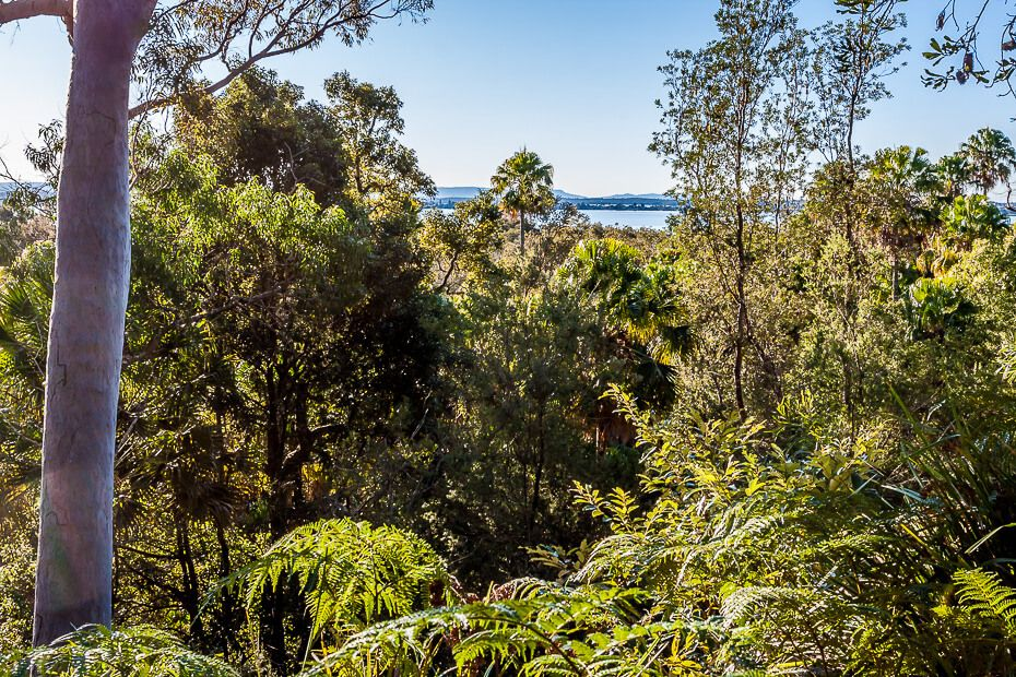 Lillypilly loop trail - filtered views of Tuggerah Lake.