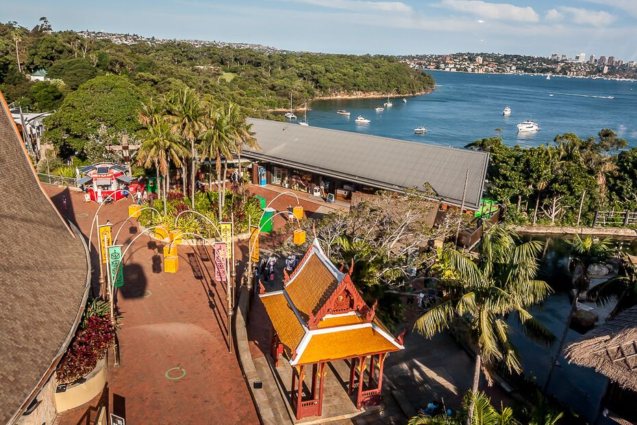 View from Sky Safari Taronga Zoo